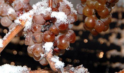 Kết quả hình ảnh cho vang đá ice wine