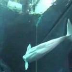 [Clip] Đến hăm thủy cung lớn nhất thế giới – Thủy cung Georgia